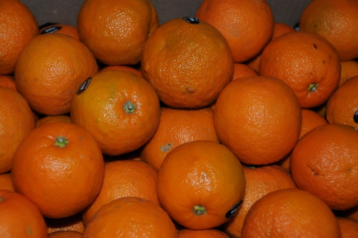 Seville Oranges ready to process